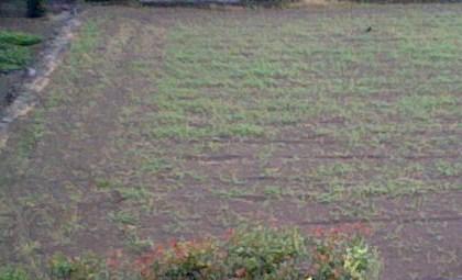 周りは全部畑。田舎過ぎて嫌だこんな場所ッ!.JPG